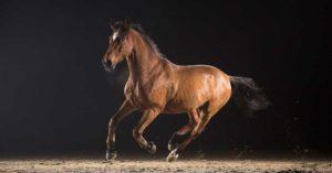 formalités douanières carnet ata chevaux